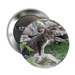 "1 Cute Kitty Cat 2.25"" Button (10 pack)"