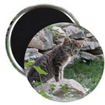 "1 Cute Kitty Cat 2.25"" Magnet (100 pack)"