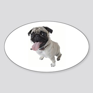 Pug Close Up Photo Sticker