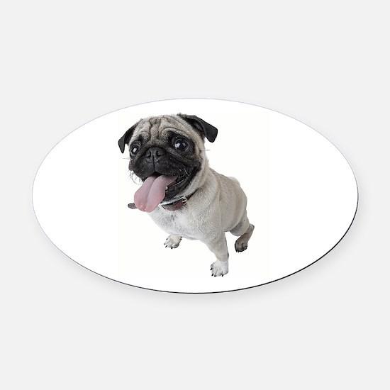 Pug Close Up Photo Oval Car Magnet