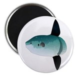 Mola Mola Ocean Sunfish Magnets