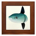 Mola Mola Ocean Sunfish Framed Tile