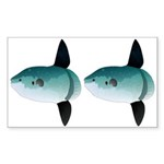 Mola Mola Ocean Sunfish Sticker