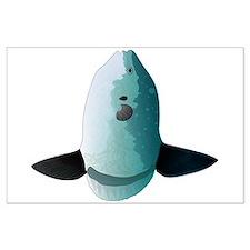Mola Mola Ocean Sunfish Posters
