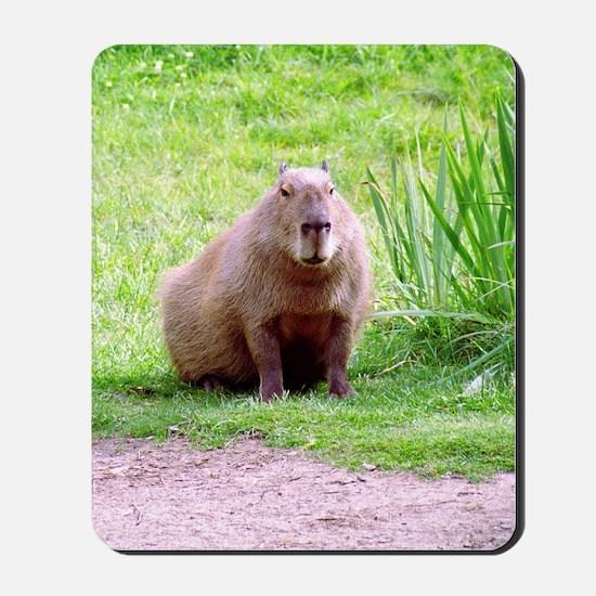 Capybara Looking Forward Mousepad