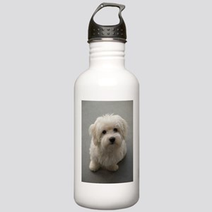 coton de tulear puppy Stainless Water Bottle 1.0L