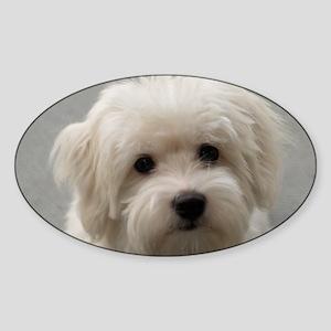 coton de tulear puppy Sticker