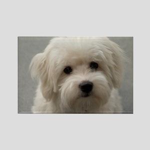 coton de tulear puppy Magnets