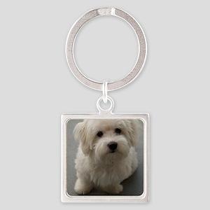 coton de tulear puppy Keychains