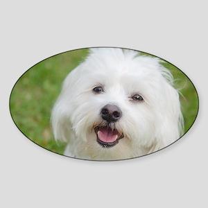Coton de Tulear Smile Sticker