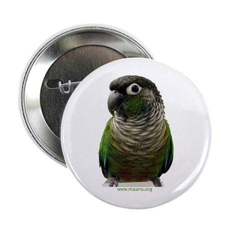 Green-Cheeked Conure - Button (10 pack)