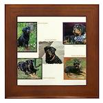Rottweilers in Framed Tile