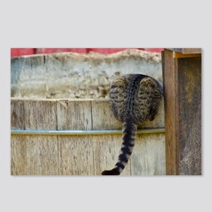 Cute Barn Cat Postcards (Package of 8)