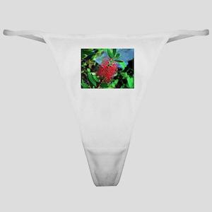 Red Australian bottlebrush flower Classic Thong