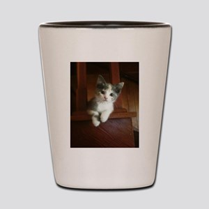 Adorable Calico Kitten Shot Glass