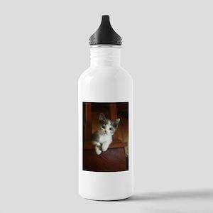 Adorable Calico Kitten Water Bottle