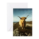 Highland cattle Greeting Cards (20 Pack)
