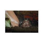 Toadily Toads Rectangle Magnet (10 pack)
