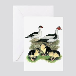 Muscovy Ducks Black Pied Greeting Cards