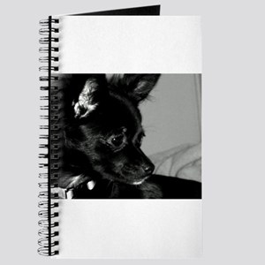 Chloe in black and white. Journal
