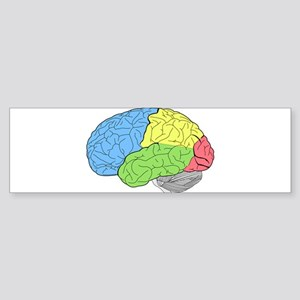 Primary Brain Bumper Sticker