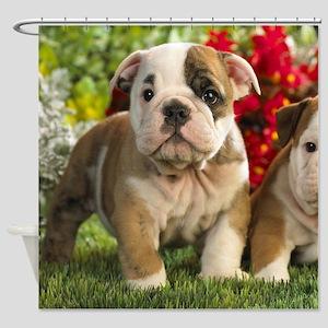 Cute English Bulldog Puppy Shower Curtain