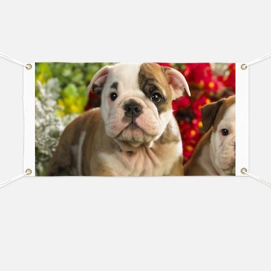 Cute English Bulldog Puppy Banner
