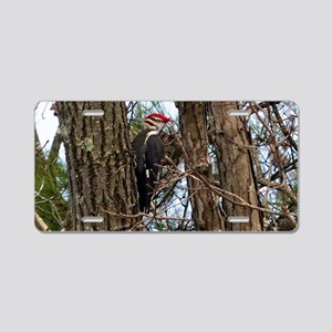 Male Pileated Woodpecker Aluminum License Plate