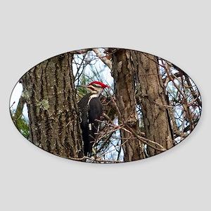 Male Pileated Woodpecker Sticker