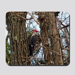 Male Pileated Woodpecker Mousepad