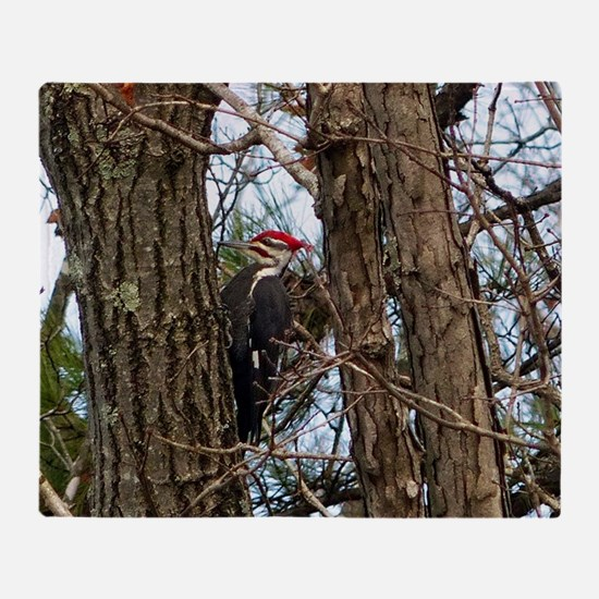 Male Pileated Woodpecker Throw Blanket