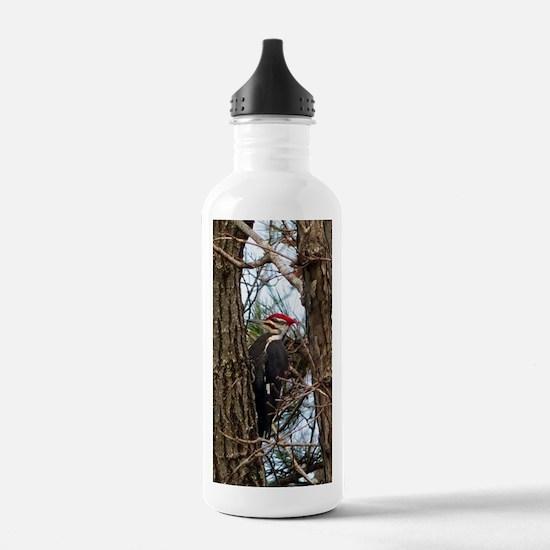Male Pileated Woodpecker Water Bottle