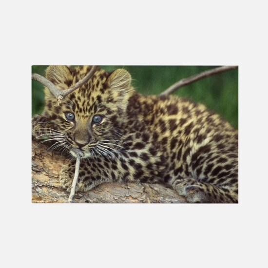 Cute Spotted leopard Rectangle Magnet