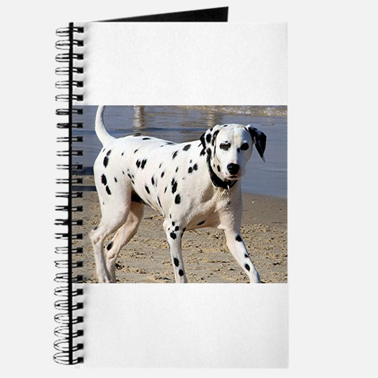 Dalmatian dog at beach Journal