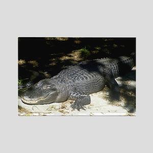 Alligator Sunbathing Magnets