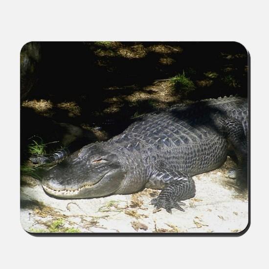 Alligator Sunbathing Mousepad
