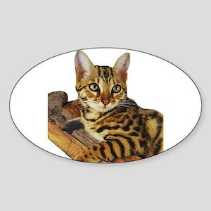 Bengal Kitten (2) Oval Sticker