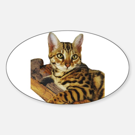 Bengal Kitten (2) Oval Decal