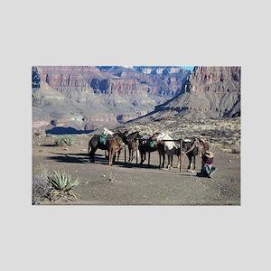 South Kiabab Mule Ride To Phantom Ranch Magnets