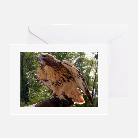 Red Tailed Hawk Ruffled Feath Greeting Cards (Pack