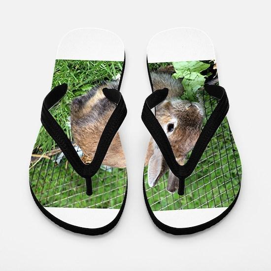 Cute Brown Rabbit Flip Flops