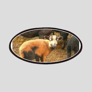 reddish baby sheep on h Patch