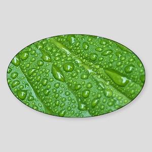 GREEN LEAF DROPS Sticker (Oval)