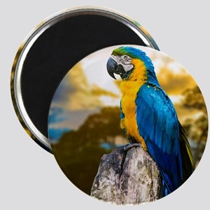Beautiful Blue And Yellow Parrot Magnets