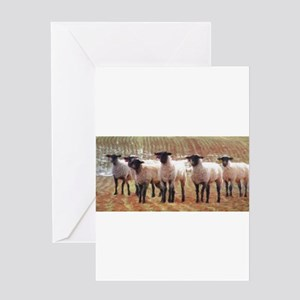 Sheep Painting Greeting Cards