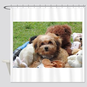 Copper the Havapookie Shower Curtain