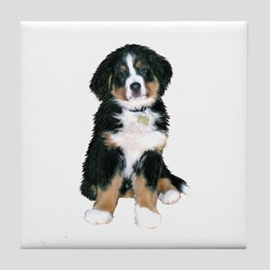 Bernese MD Puppy Tile Coaster