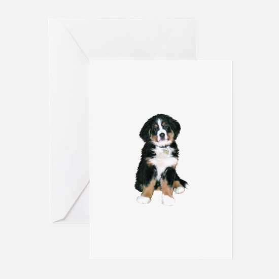 Bernese MD Puppy Greeting Cards (Pk of 10)