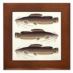 Vundu Catfish Framed Tile