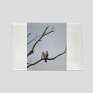 Peregrine Falcon Magnets